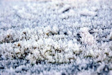 Icy rugby pitch